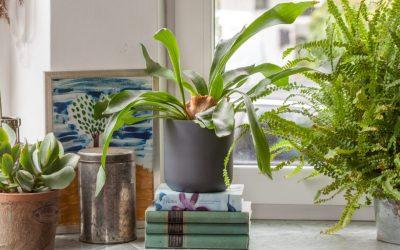 Vilken grön växt är bäst?