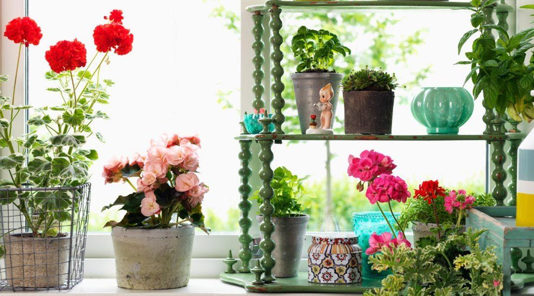 Skötselråd – Krukväxter